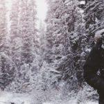 Jaki krój powinny mieć kurtki zimowe robocze?
